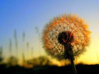 http://www.desktopwallpapers.ru/flowers/pics/551-200.jpg