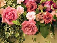 http://www.desktopwallpapers.ru/flowers/pics/553-200.jpg