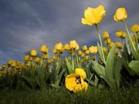http://www.desktopwallpapers.ru/flowers/pics/555-200.jpg